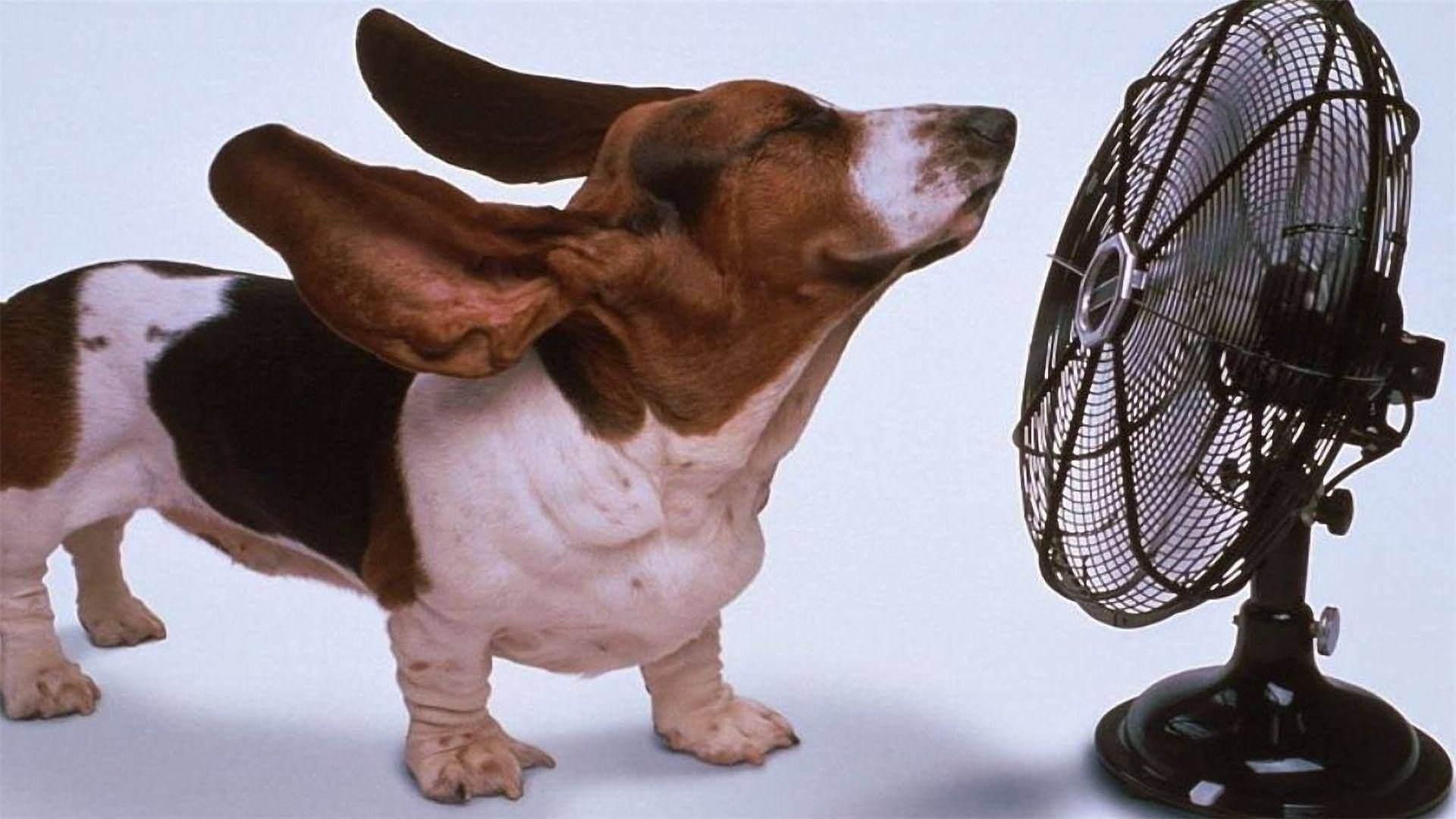 Ürperten sıcaklık