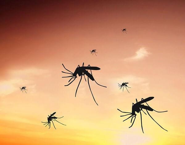 Yazın sivrisineklerden kurtulmanın yolu